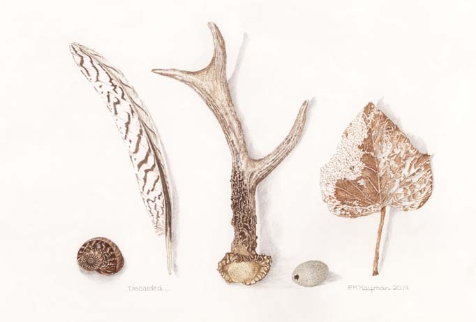 Fossils, Fish and Feathers